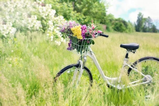 tag_des_fahrrads.jpg