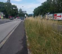 2017-06-gras-vor-kreuzung-radweg-autobahnabfahrt.jpg